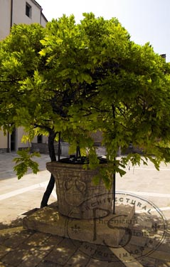 Wellhead Cortile Di Umbria